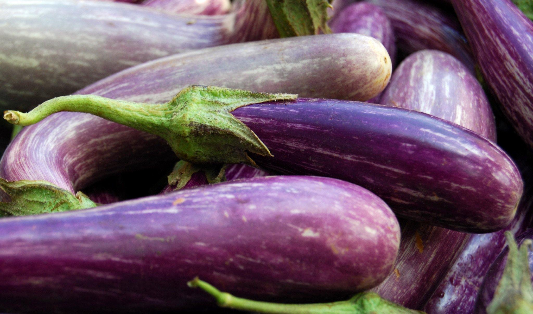 Could Ancient Eggplant Save the Future of Food   735e6a86e803e