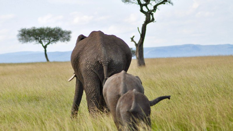 elehpants (1)