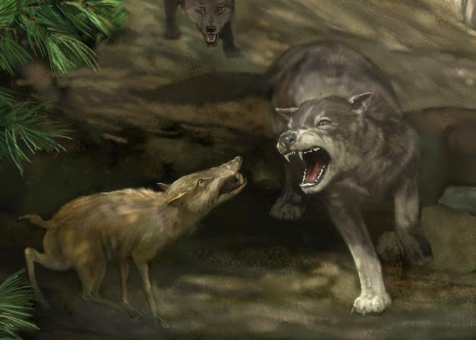 dire wolf menacing a peccary