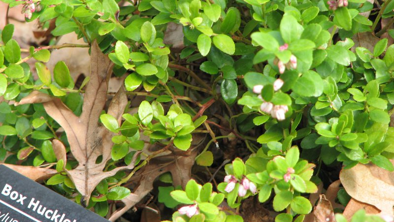 Rare and Remarkable Plant is Changing Our Sense of What it Means to Be 'Old'