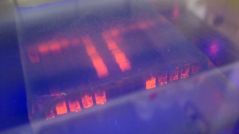 gel-electrophoresis_2048x1152