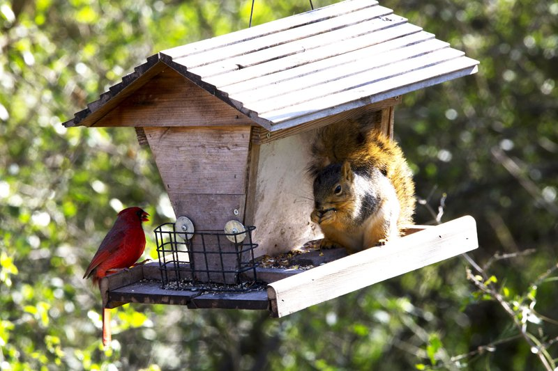 Squirrels eavesdrop on bird chatter to tell when a threat