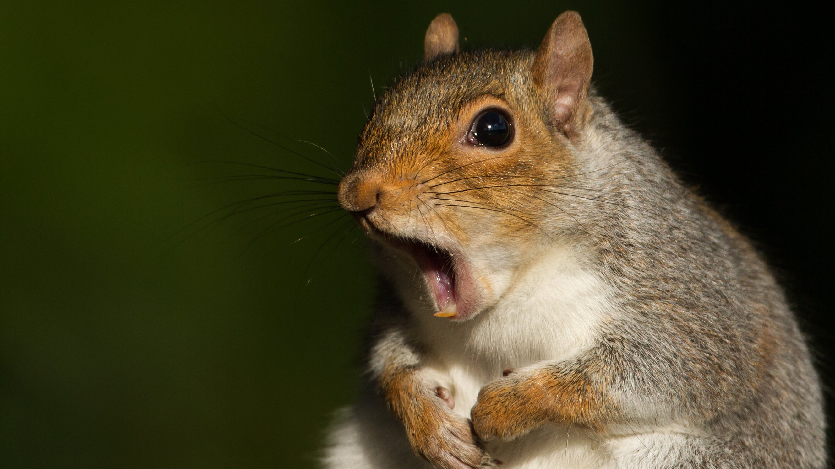 Six Stupendous Snippets of Squirrel Science   NOVA   PBS