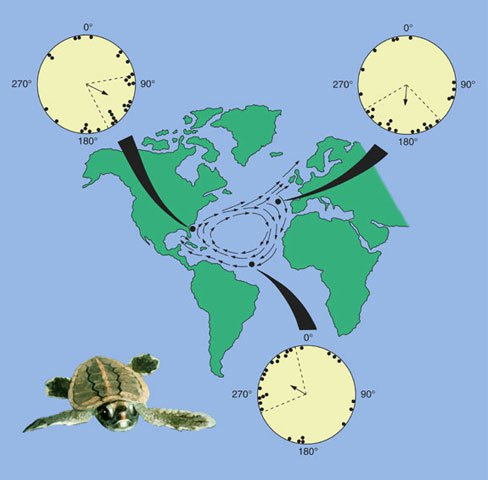 sea turtle migration routes