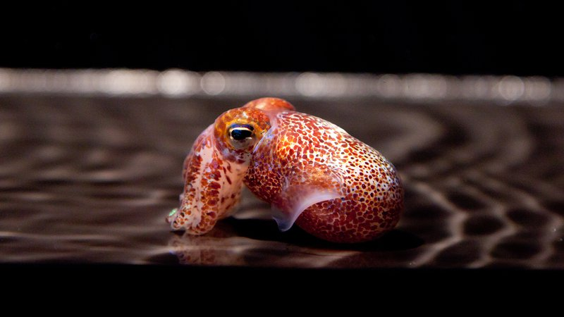 mcfall_squid_feb2012_104.jpg