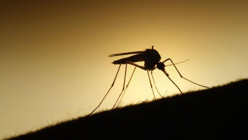 mosquito-silhouette