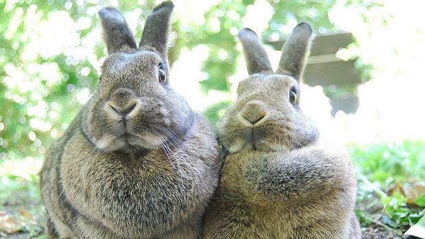 rabbits_620