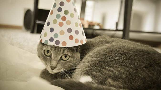 Schrödinger's Cat Lives On (Or Not) at the Age of 80