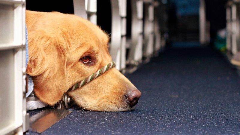 seizure-dog-training