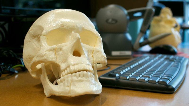 skull-model-salisbury-lab