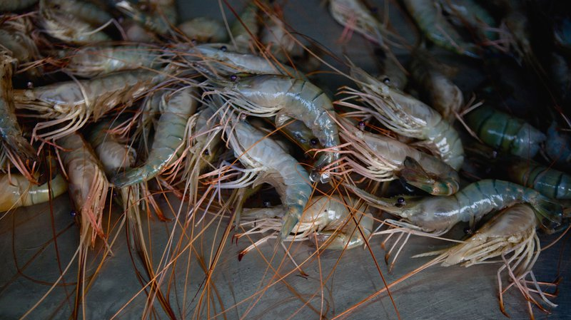 How Thailand's Dying Shrimp Are Killing an Indian Village
