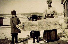 19th century wolf pelt