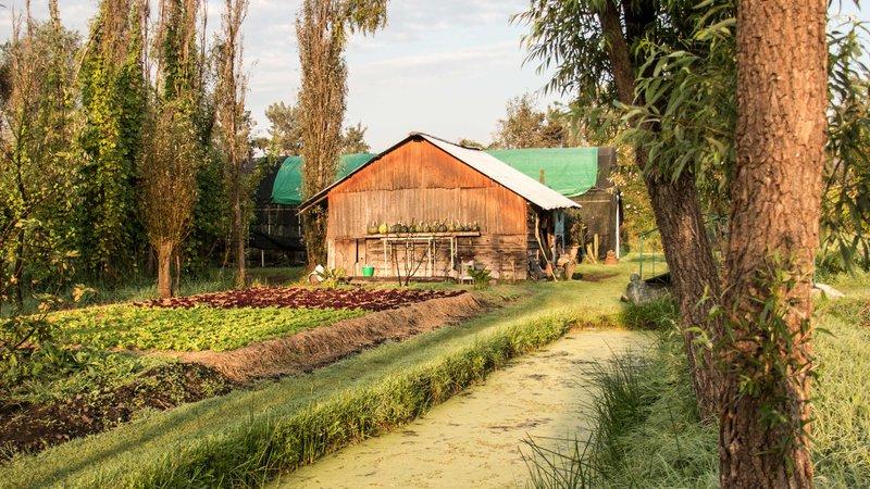 Xochimilco-farm