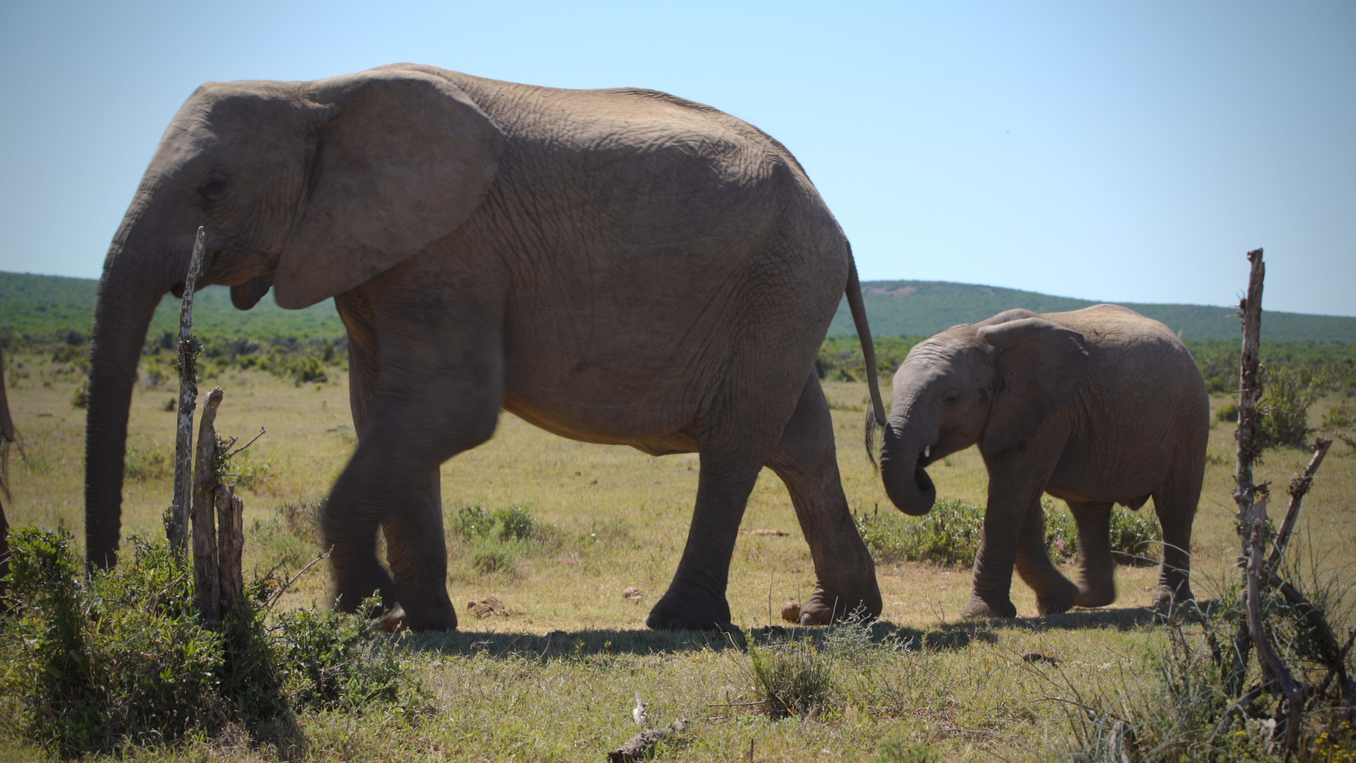 This AI Can Help Park Rangers Find Poachers