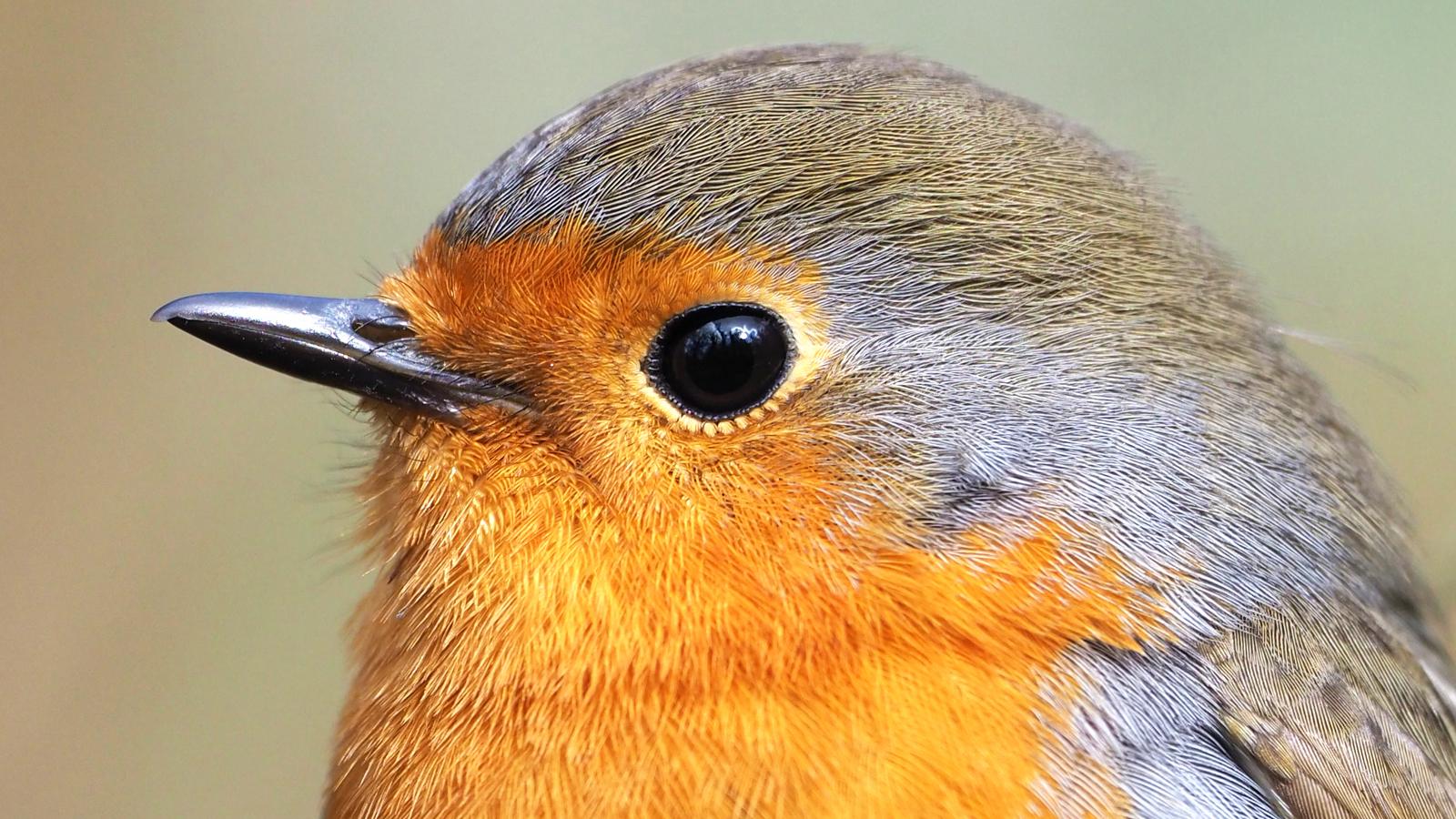 A bird's eye view of quantum entanglement