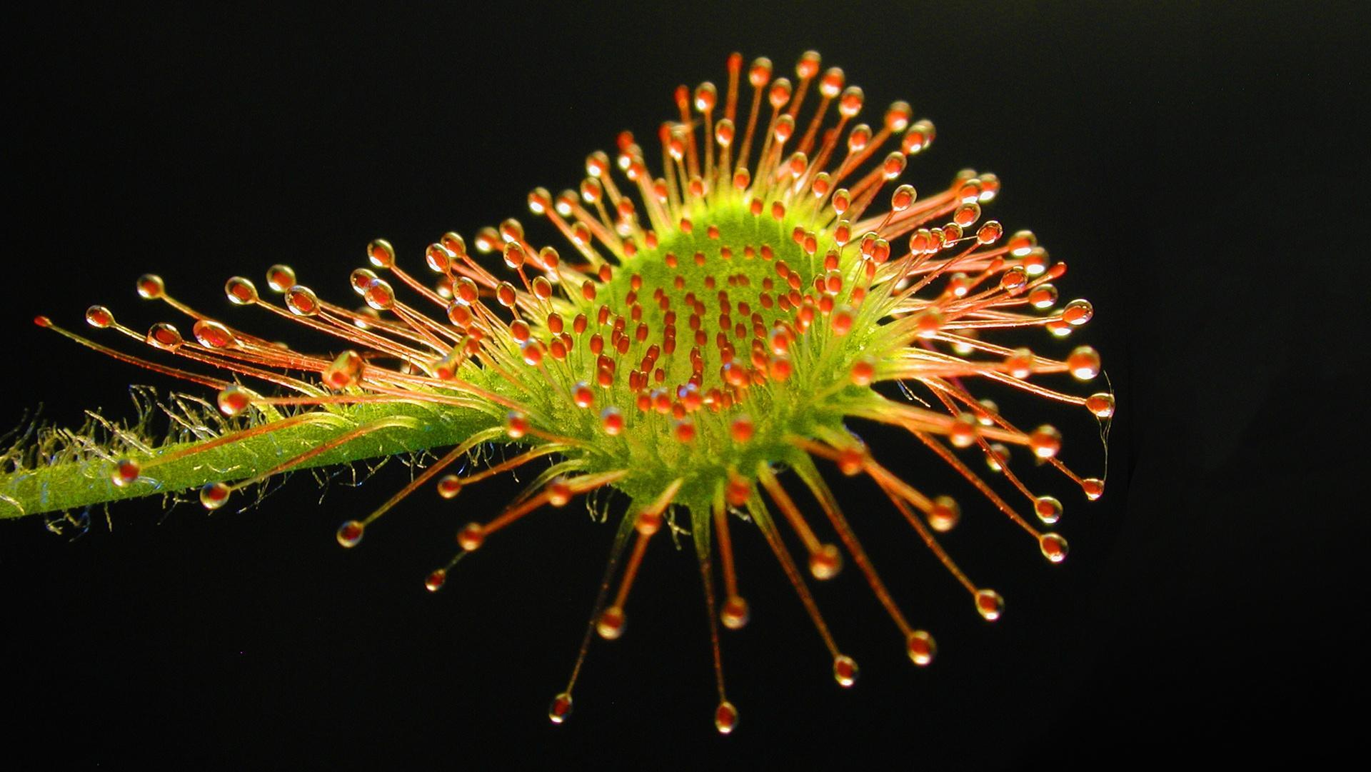 4 Deadly Carnivorous Plants Hero