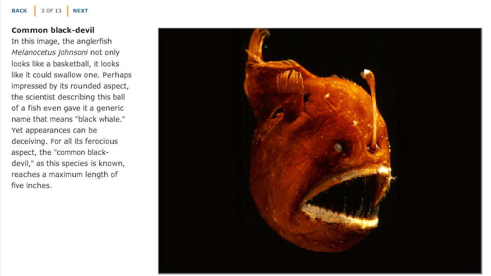 Deep-Sea Bestiary - Hero Image