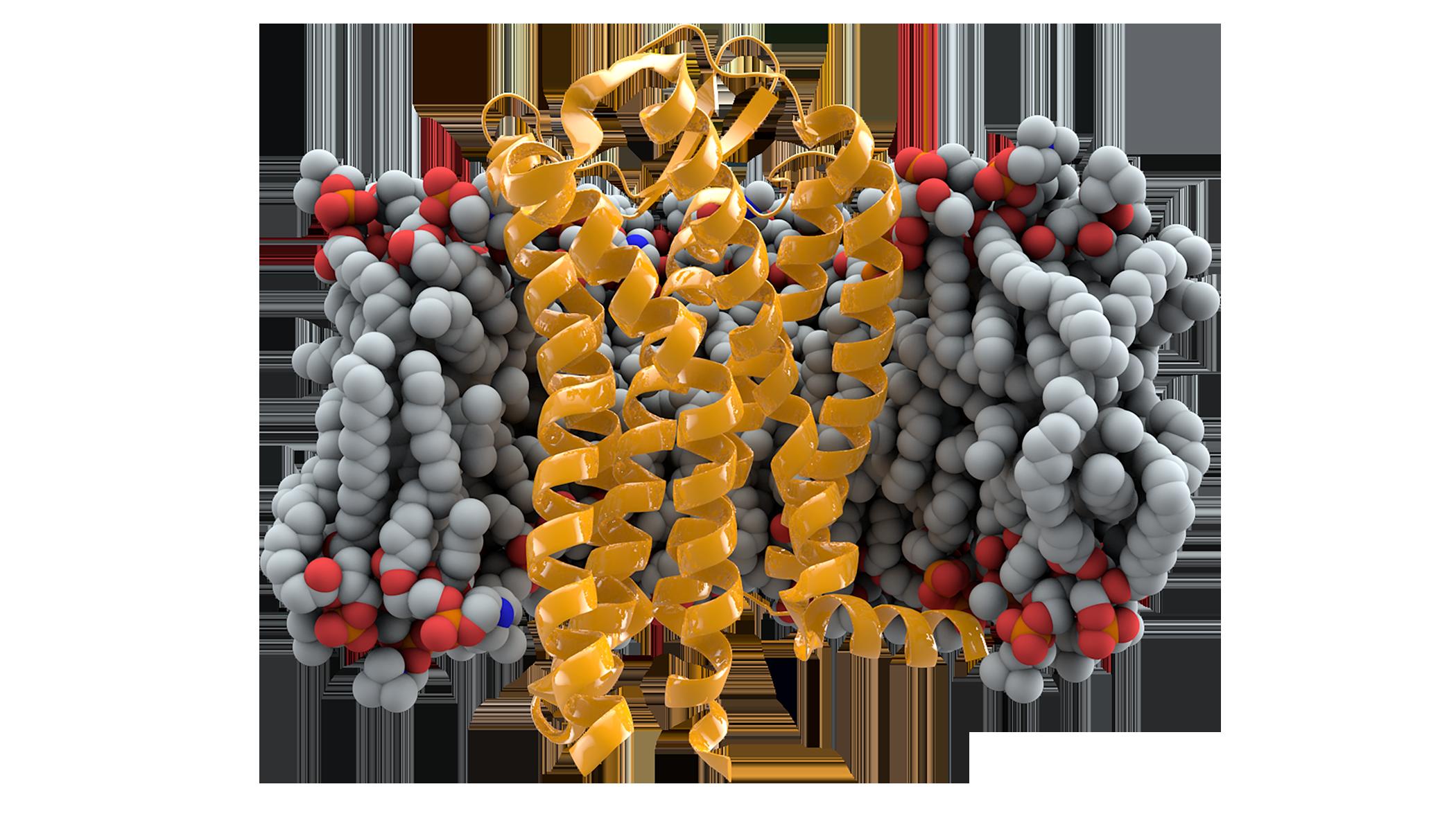 CCR5+membrane1.png