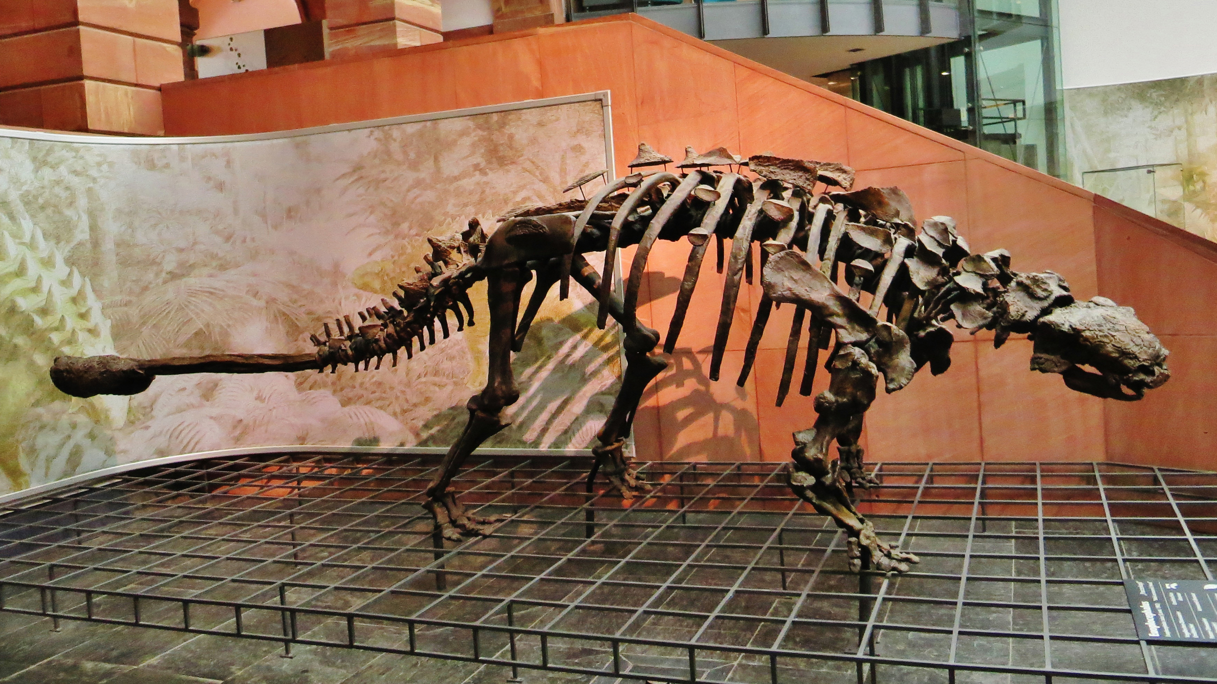 Euoplocephalus_tutus_875 Ghedoghedo Wikimedia Commons State Museum of Natural History Karlsruhe Germany.jpg