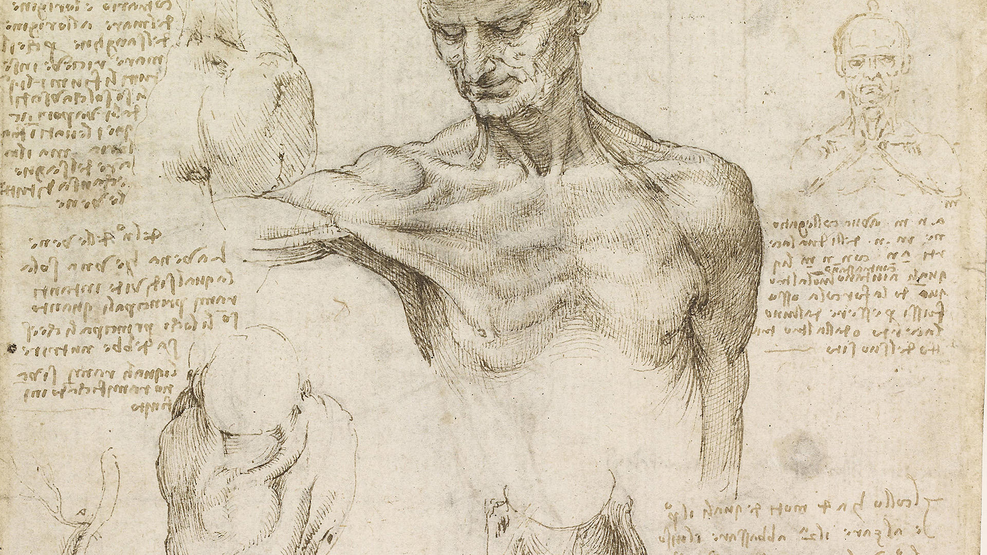 Anatomy professor uses 500-year-old da Vinci drawings to guide cadaver dissection