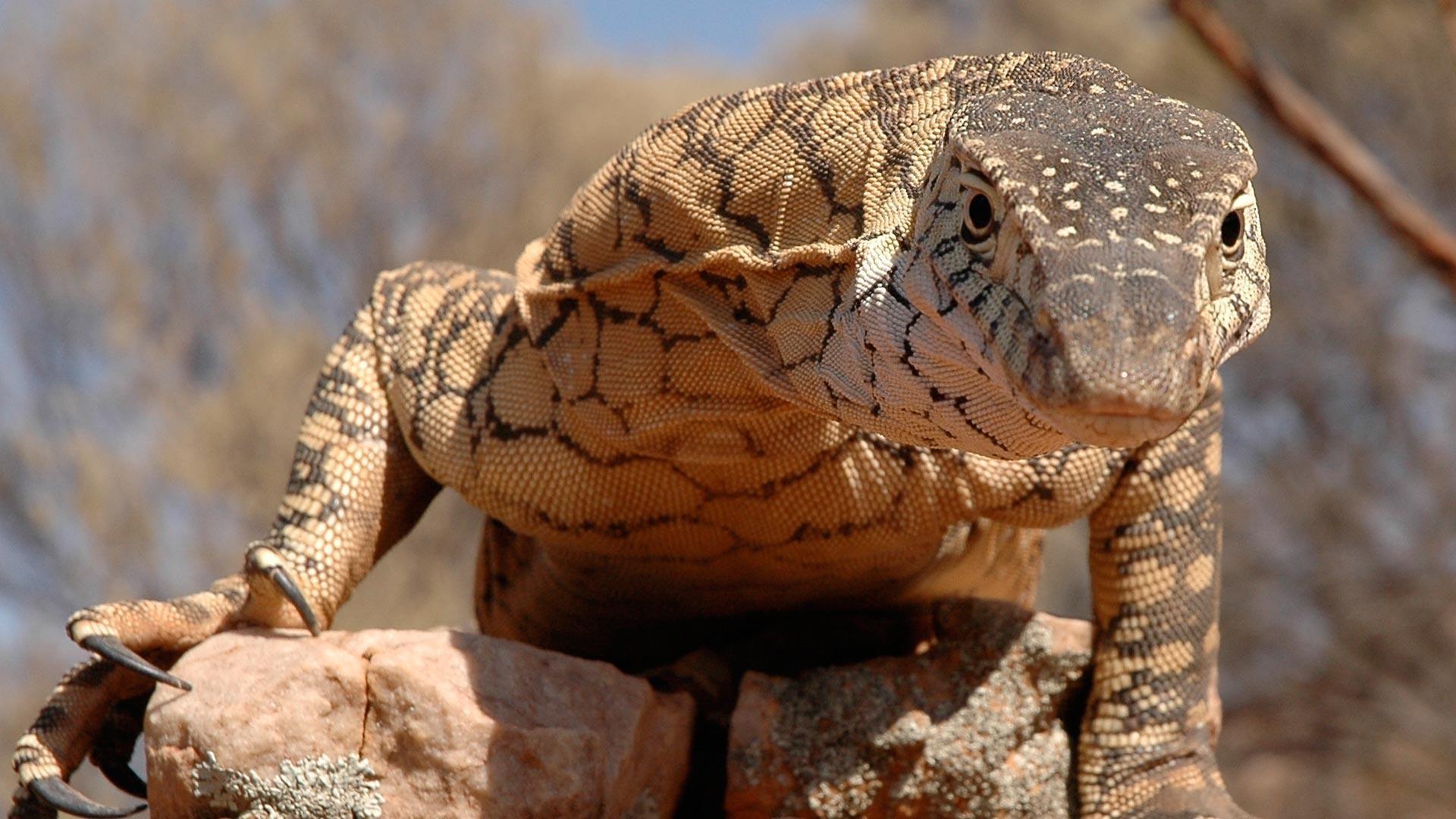 lizard-kings.jpg