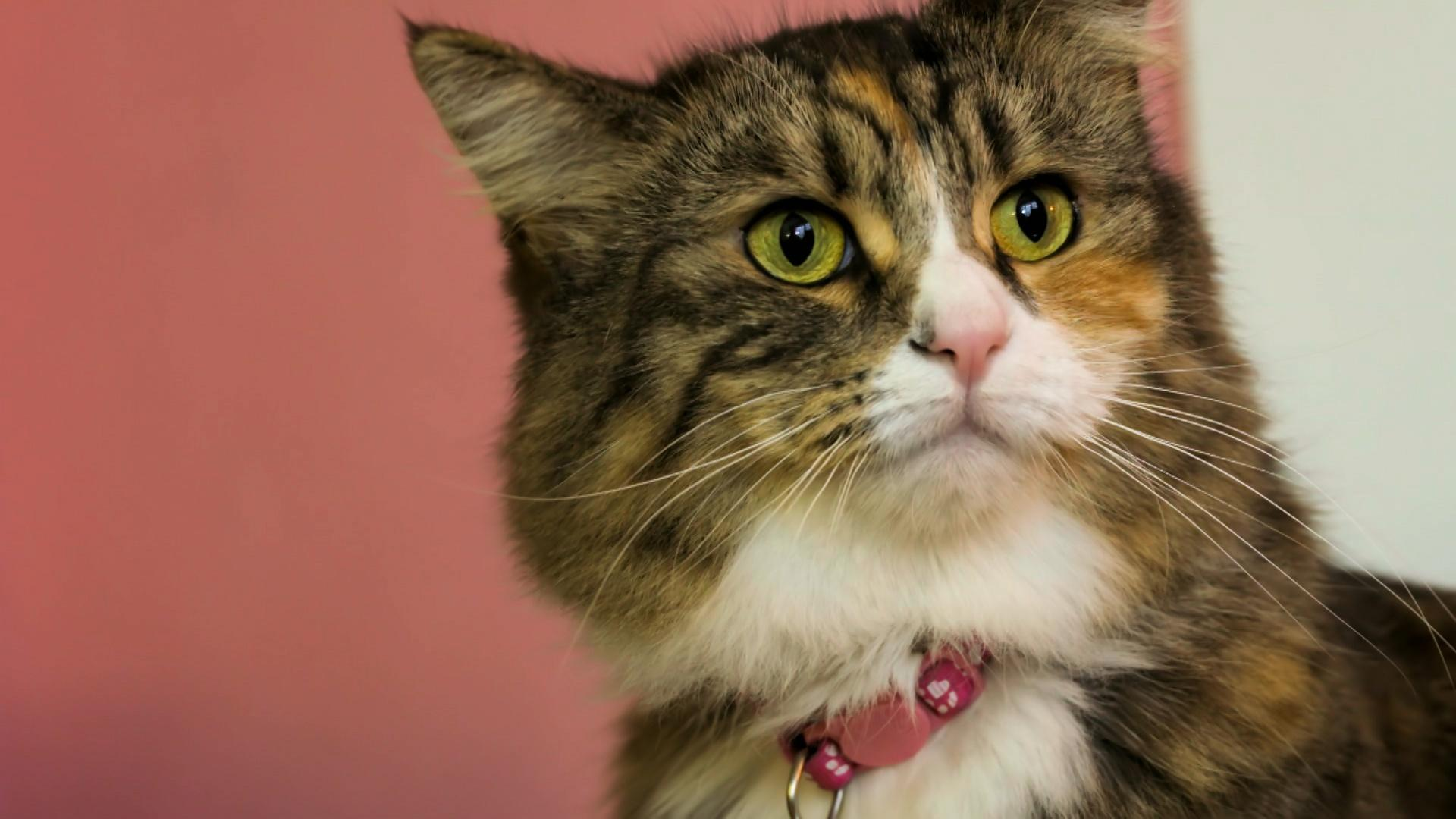 Are Cats More Expressive Than We Think? Hero