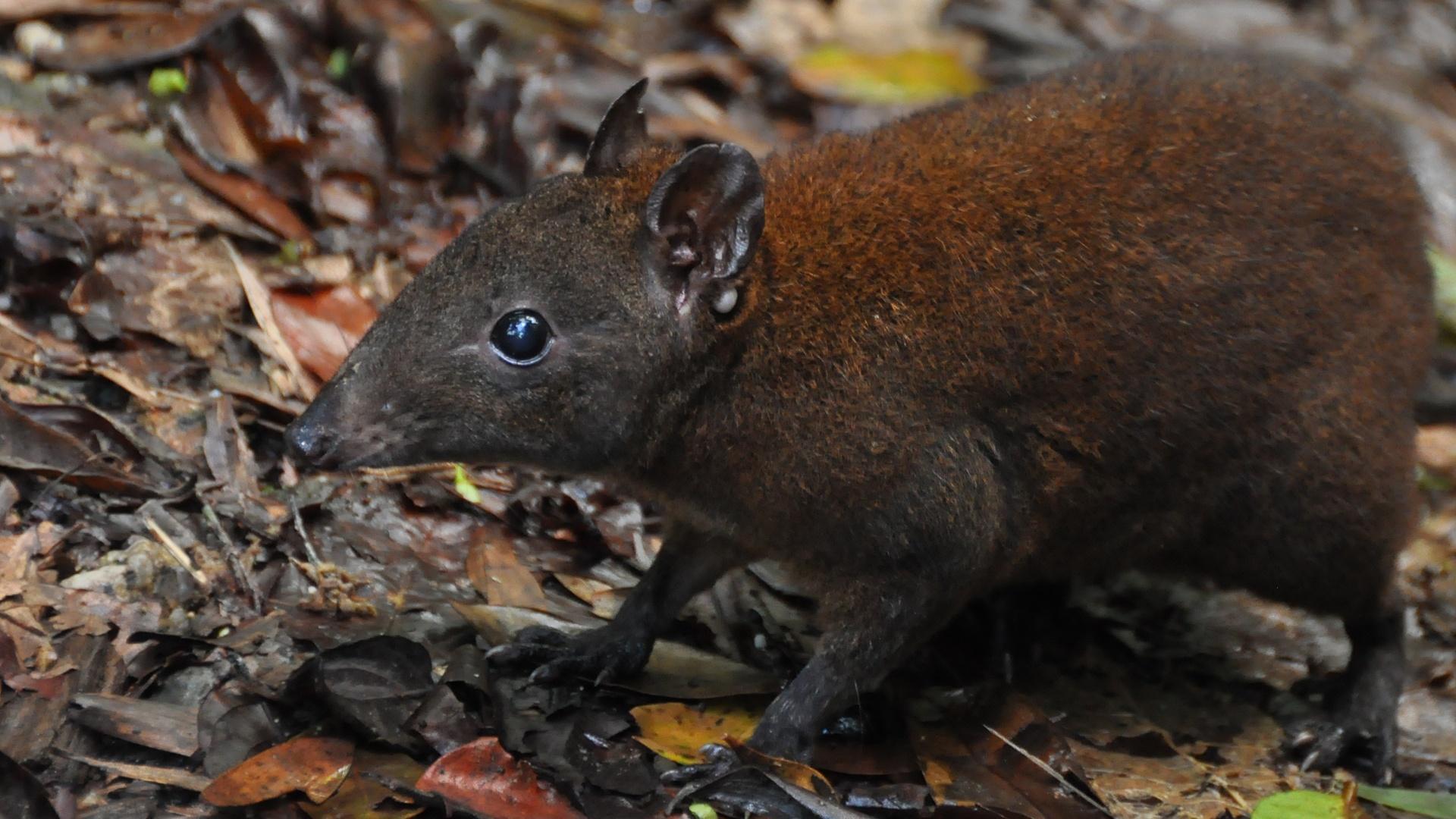 Australia's First 4 Billion Years: Strange Creatures Hero
