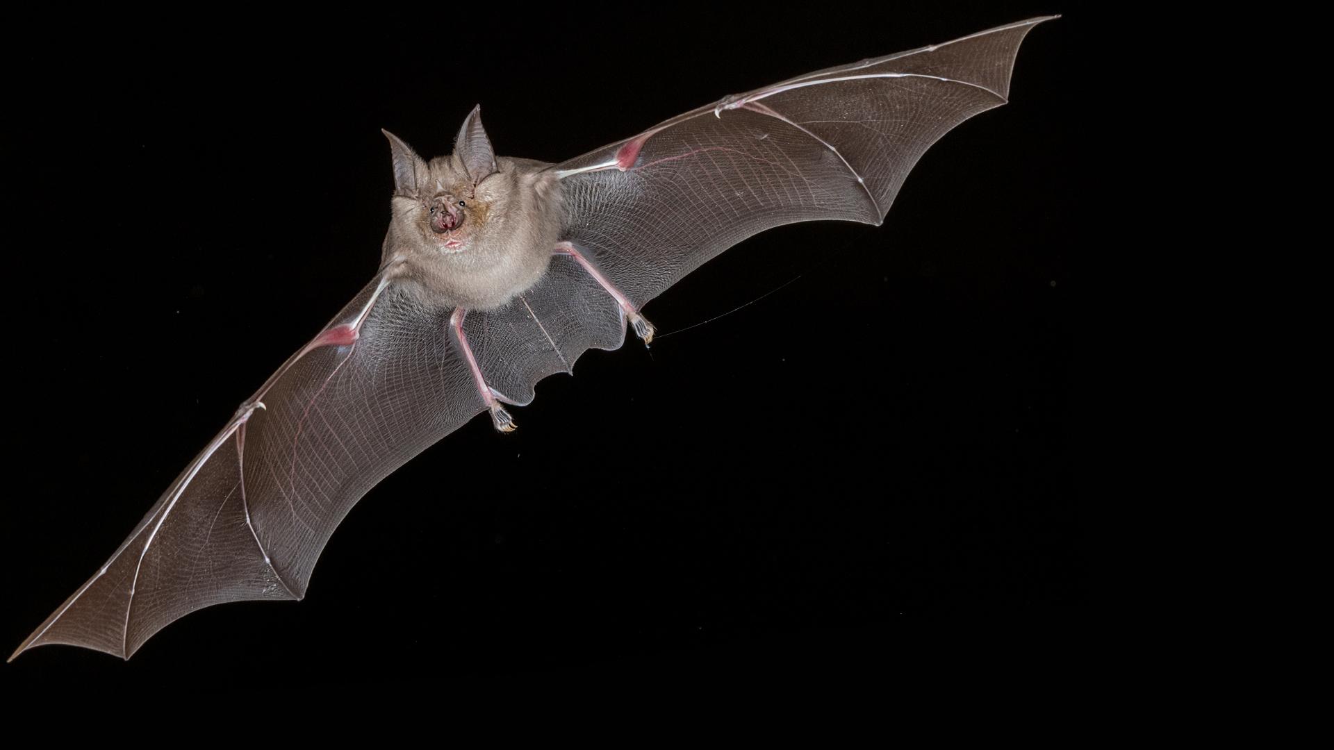 Bat Superpowers