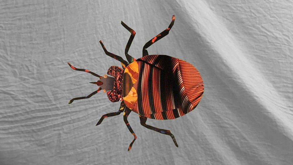 Bed Bug Sex Hero