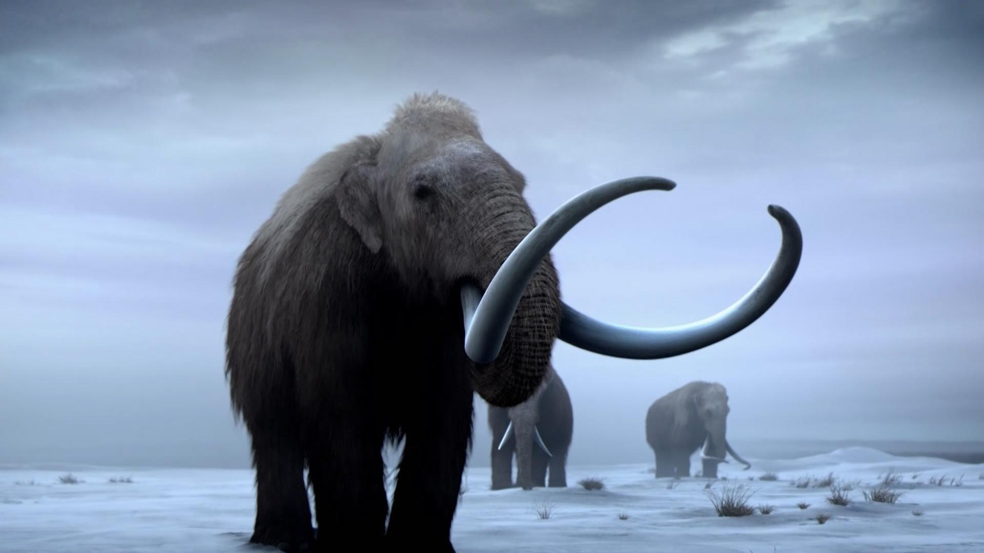 Bringing Back Woolly Mammoths Hero