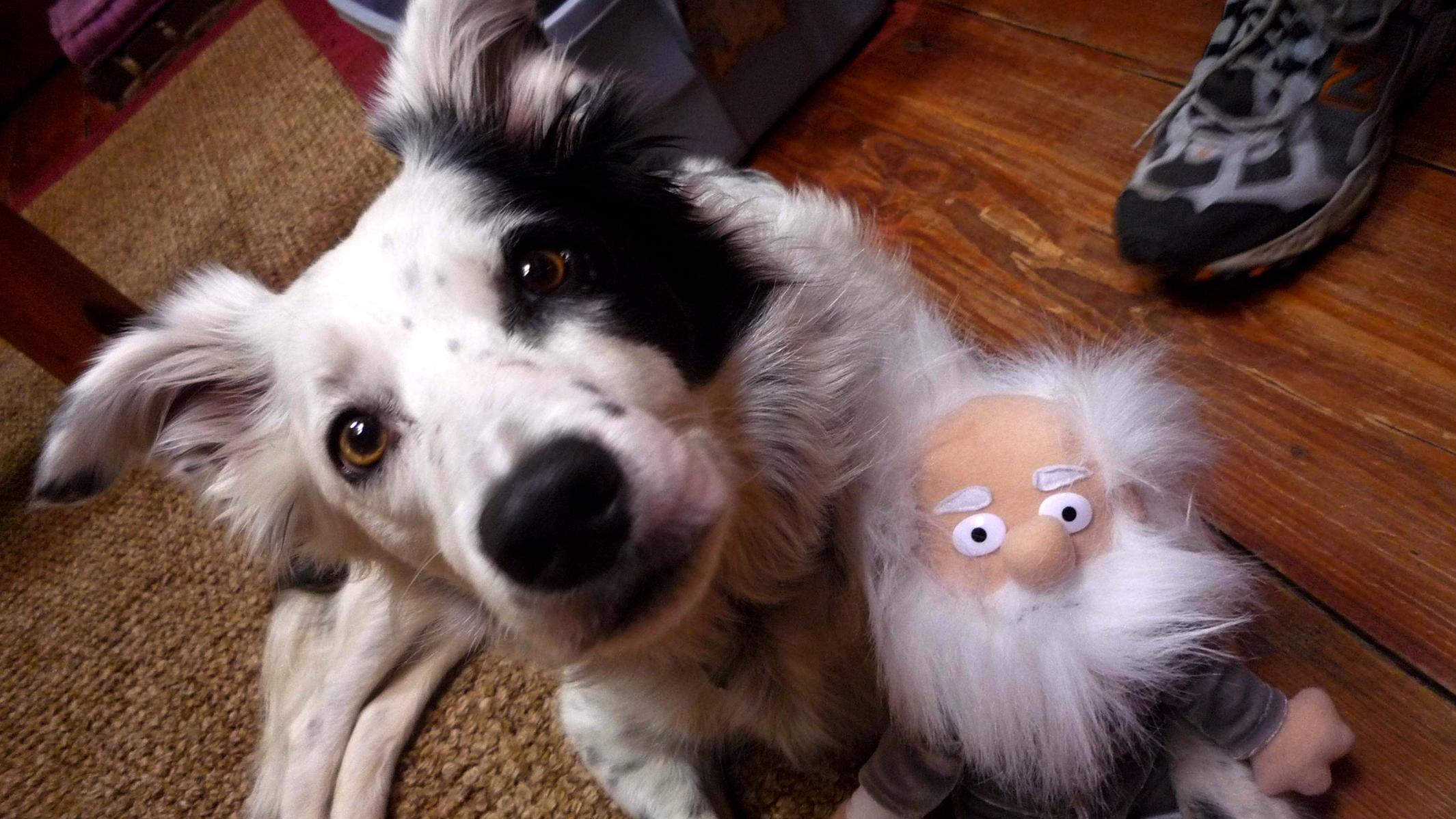 The World's Smartest Dog Hero