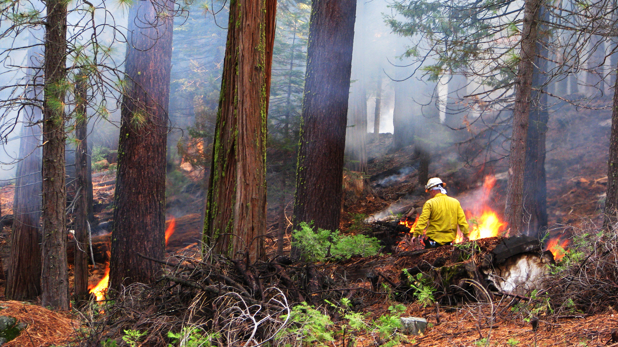 Controlled Fires Could Actually Save Forests And Fight