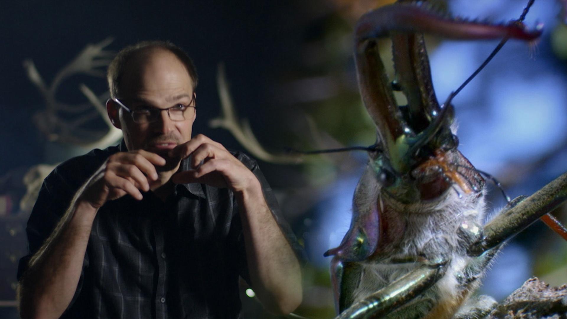 Darwin's Beetles Spar Off Hero