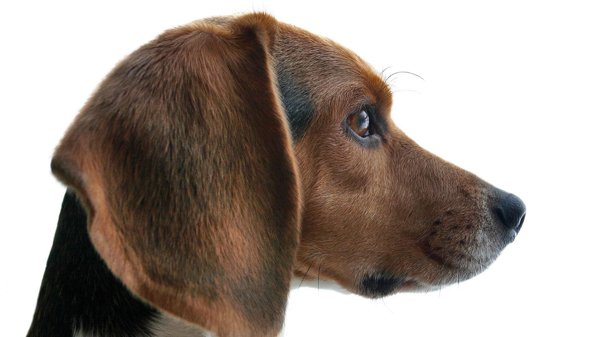 Dogs Decoded Hero