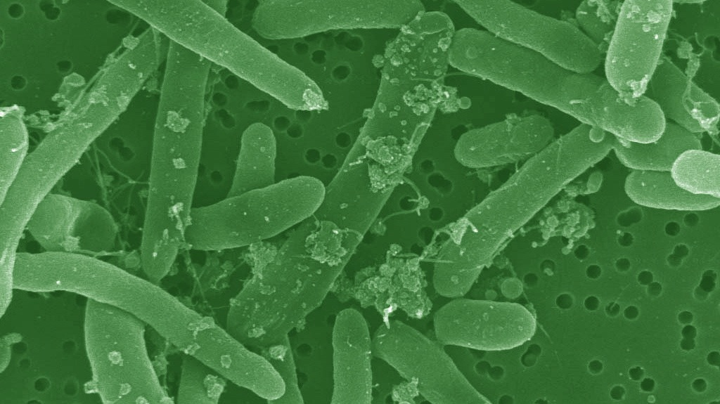 Why Synthetic Biology Is the Field of the Future