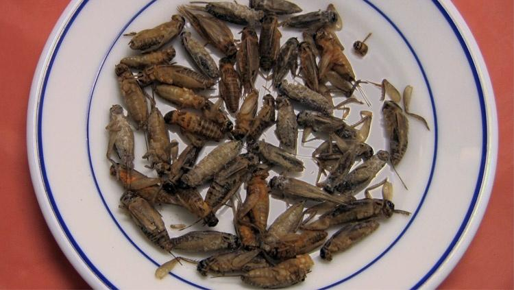 Five Reasons to Eat Insects Hero