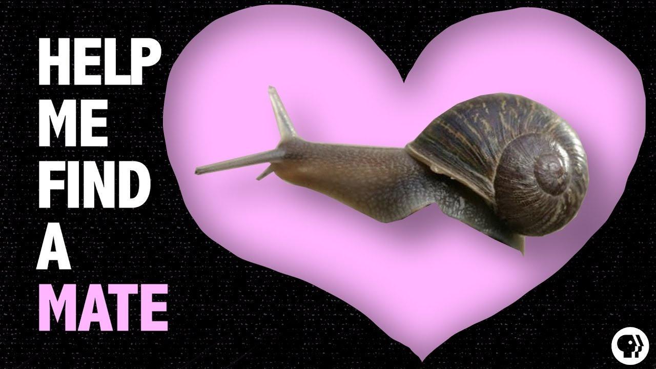Help a Snail Find True Love! Hero