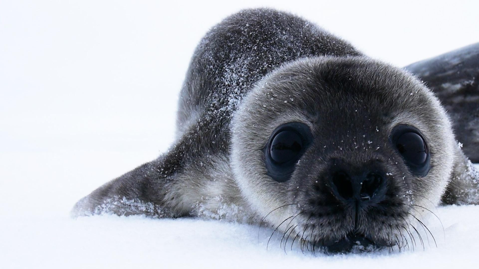 cutest baby seals