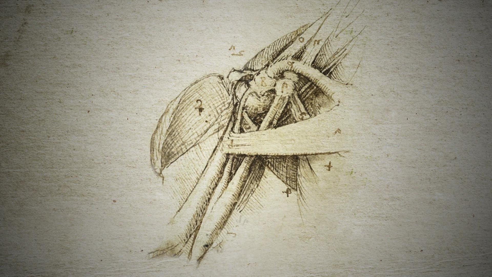 How Leonardo da Vinci Used Anatomy to Inform his Paintings Hero
