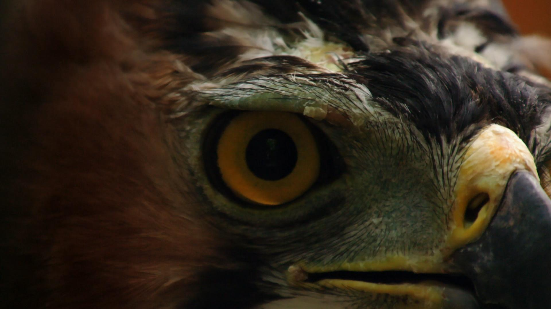 How Sharp are an Eagle's Eyes? Hero