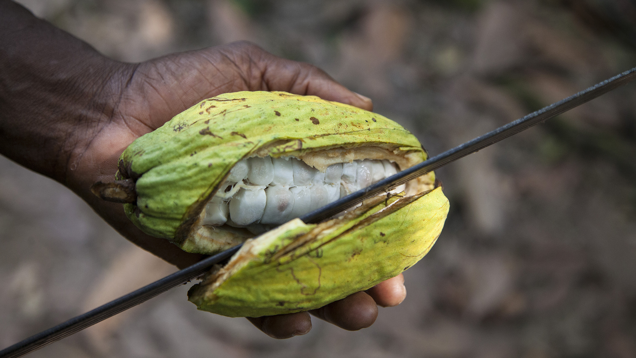 Many cocoa farm workers aren't reaping the benefits of Fairtrade certification