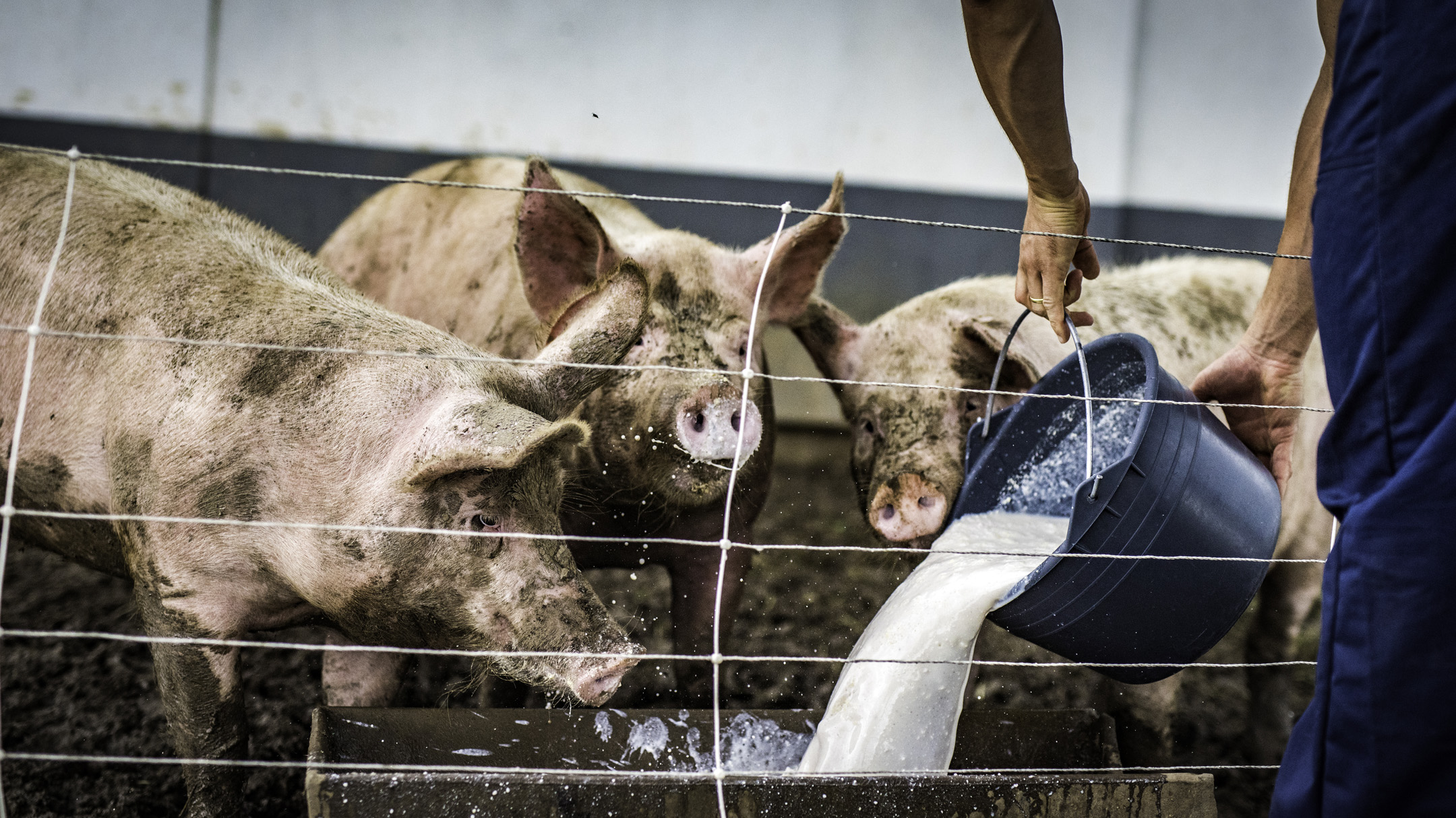 Antibiotic-resistant bacteria in farm animals are rising in low- and middle-income countries