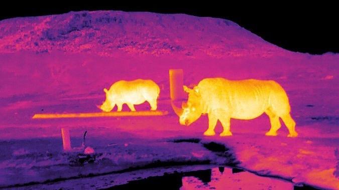 infrared-animals