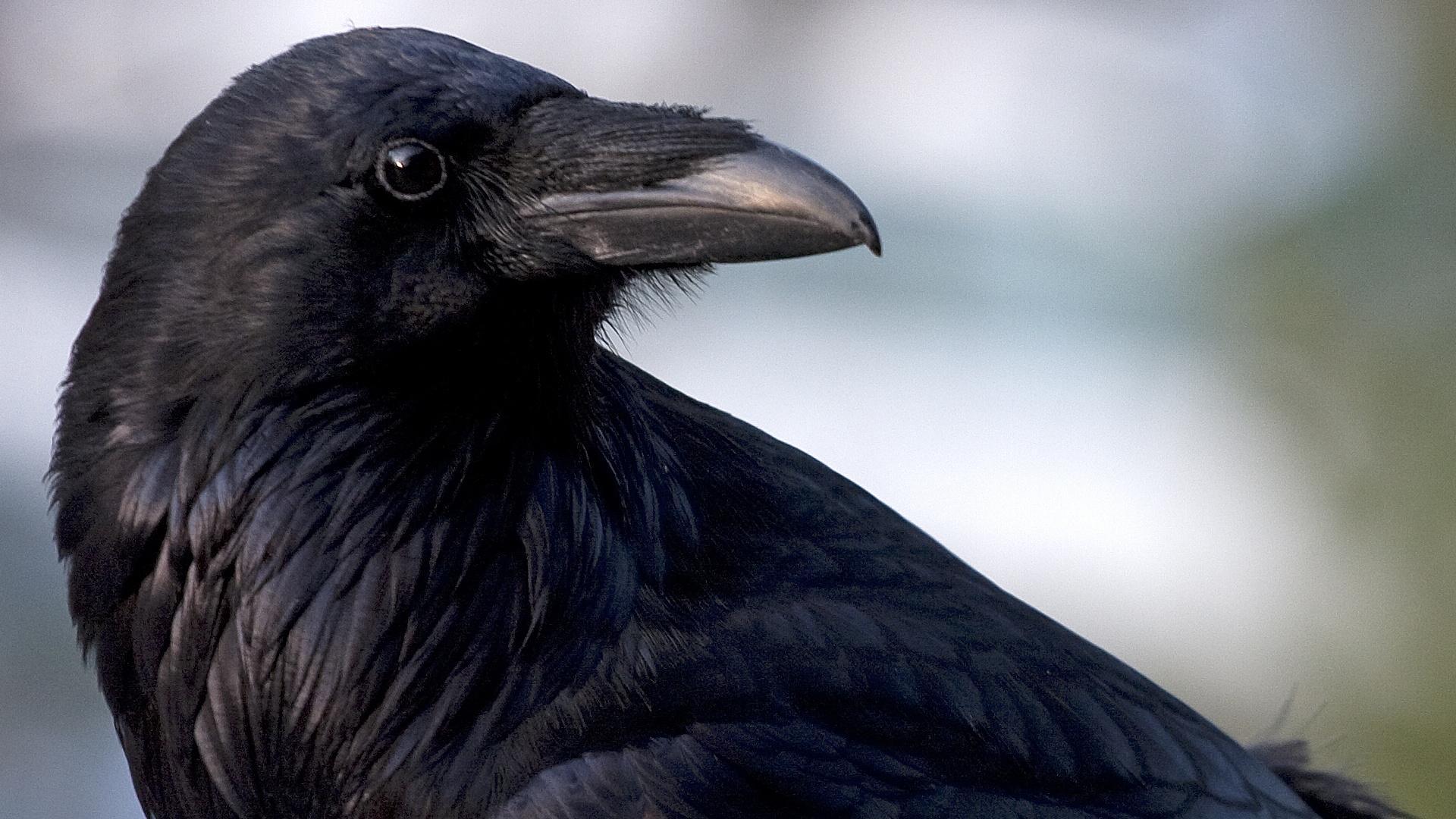 Inside Animal Minds: Bird Genius Hero