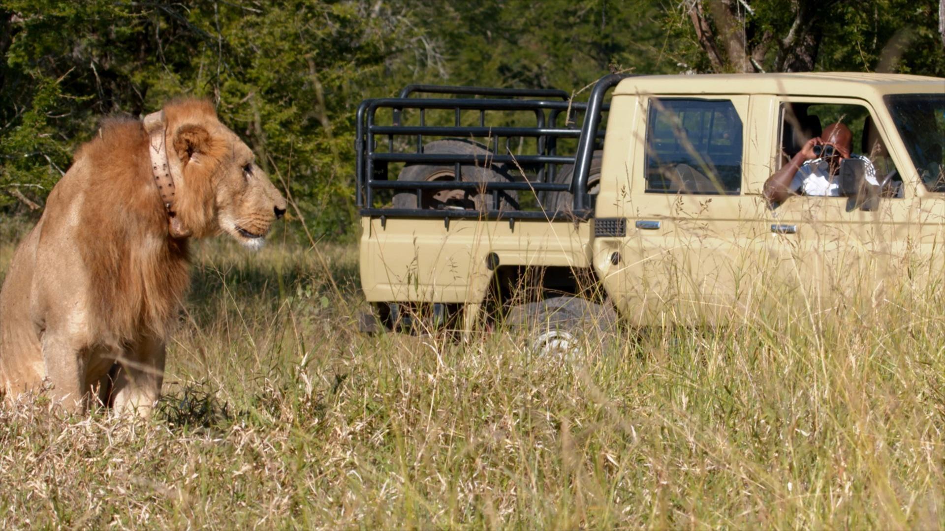 Meet Gorongosa National Park's Head Veterinarian Hero