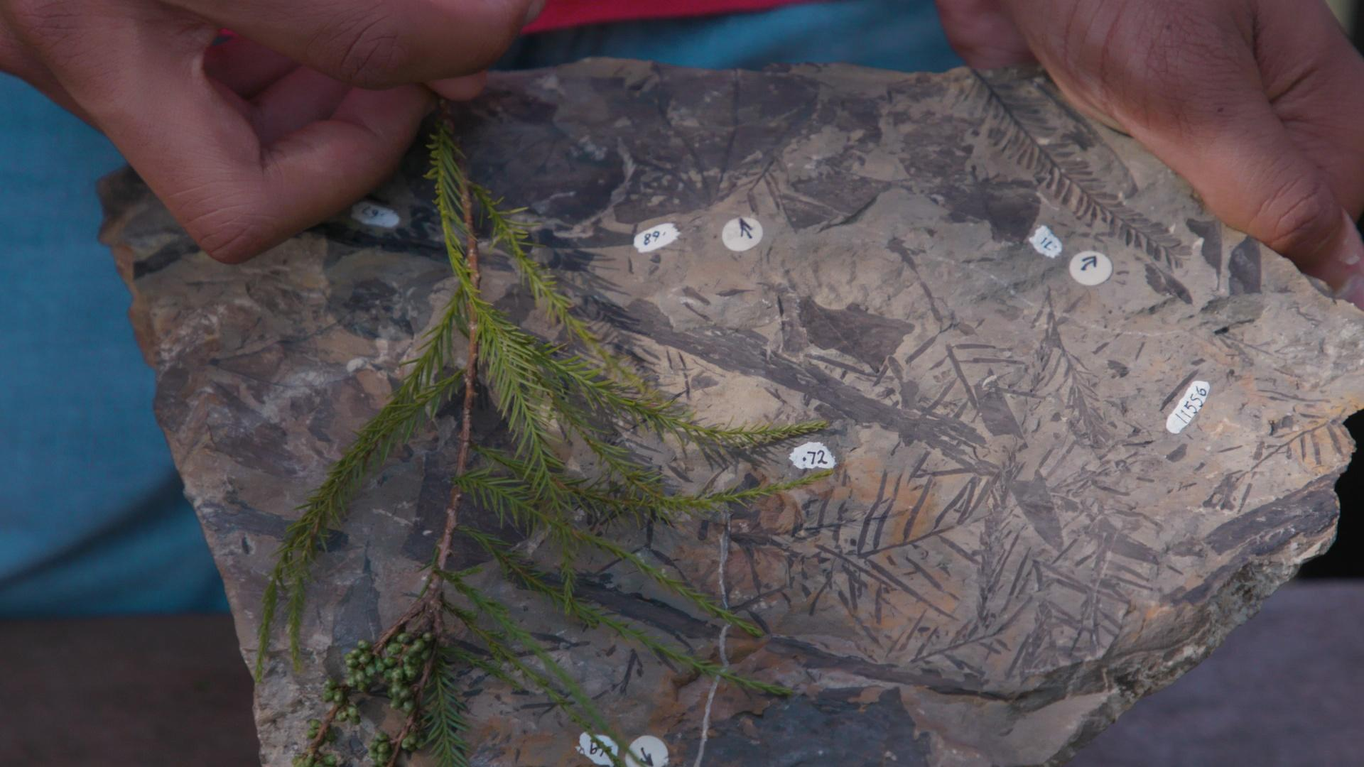 Plant Fossils Hint at Arctic's Swampy Past Hero