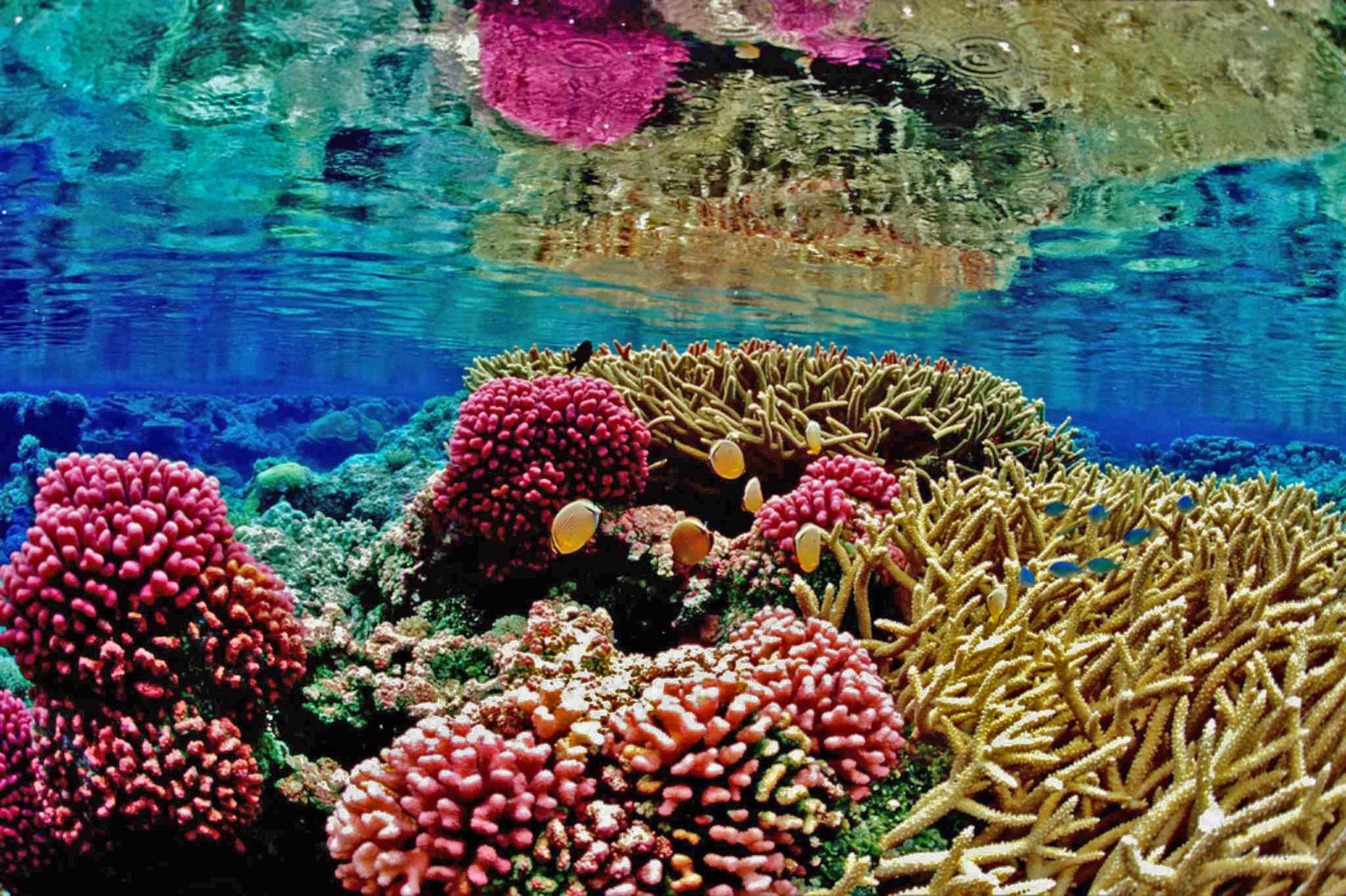 recife-1690647_1920.jpg