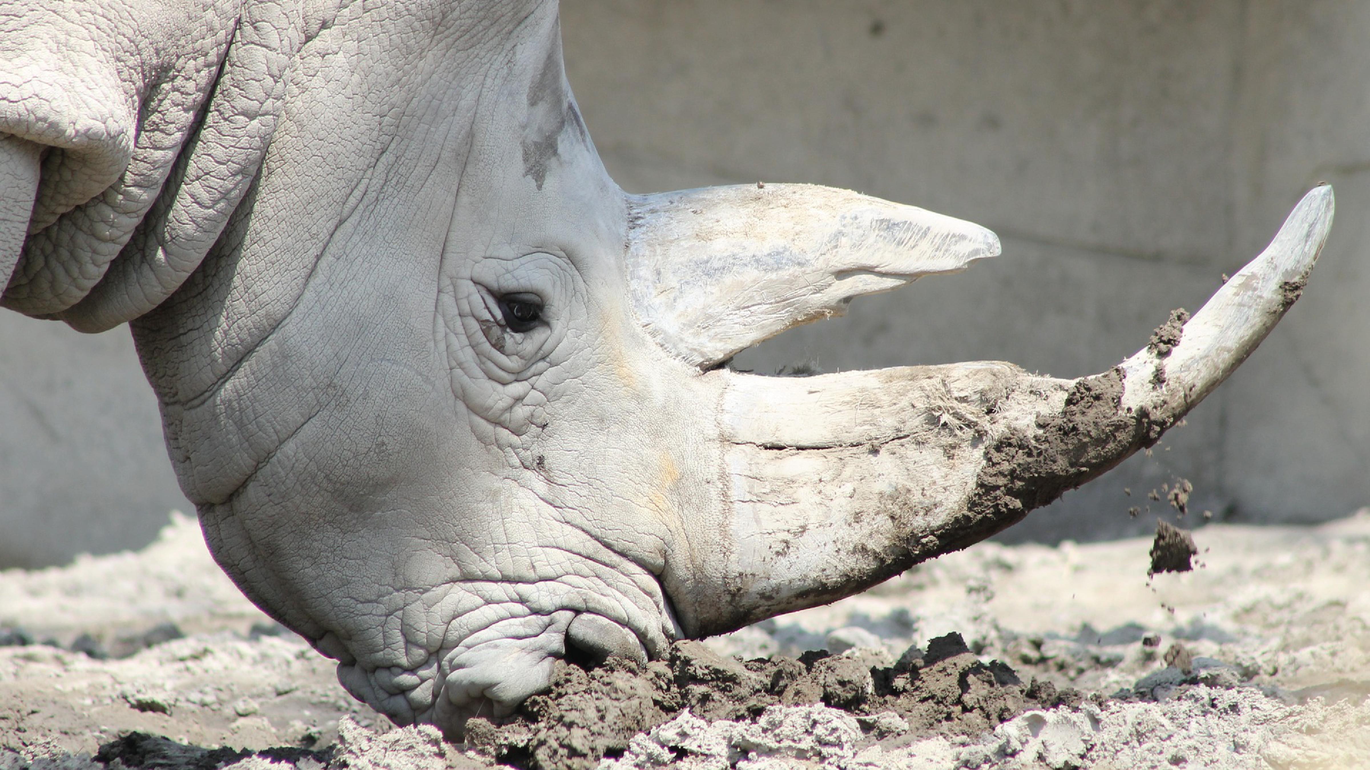 Rhino169-01