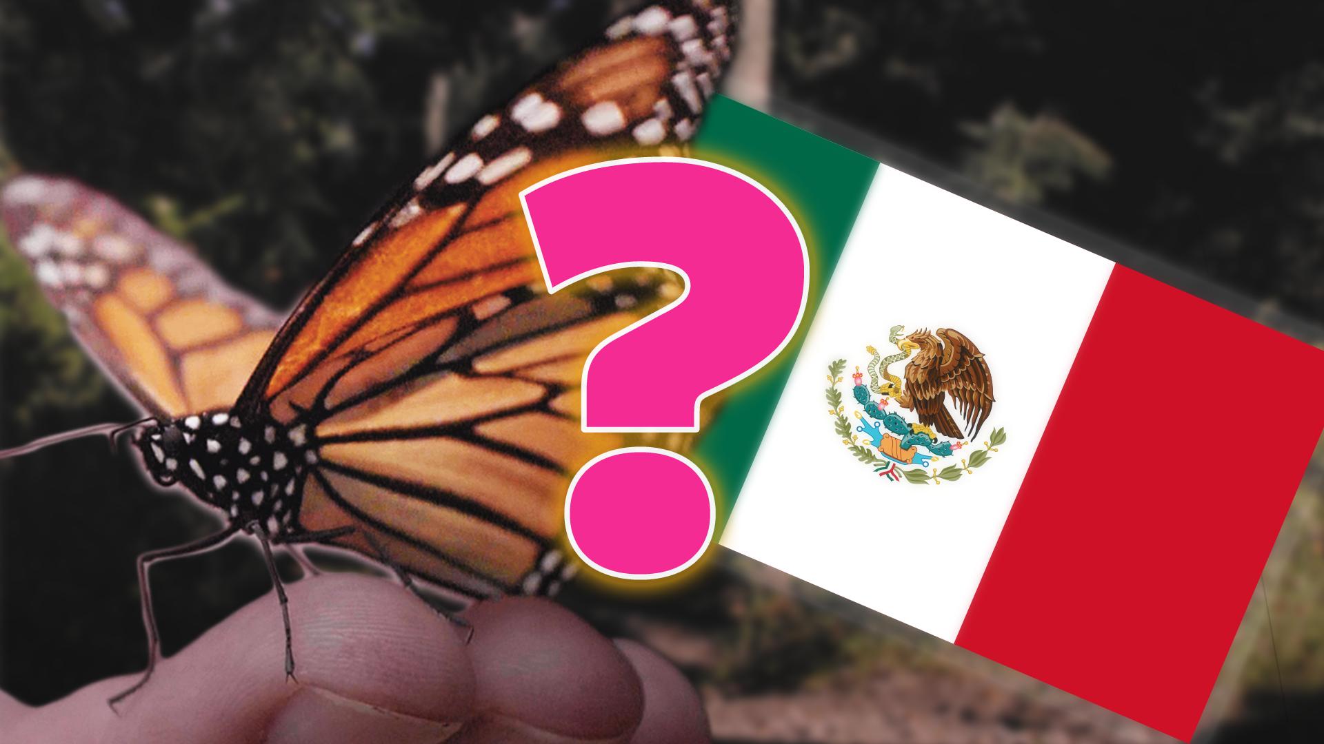 The Big Lie about Monarch Butterflies Hero