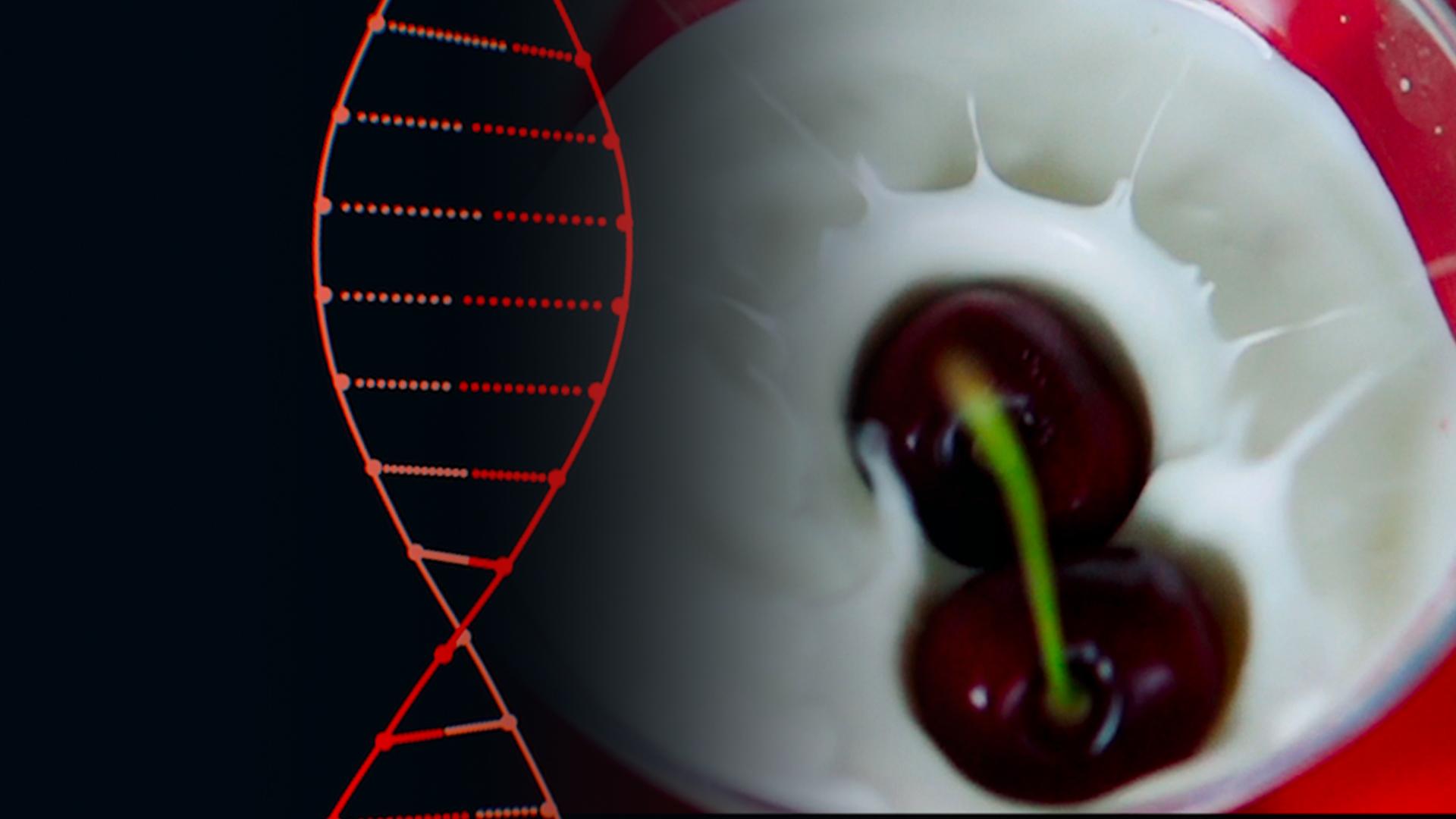 "The ""Holy Grail of Yogurt"" is CRISPR Hero"